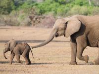Elefanten-Quiz