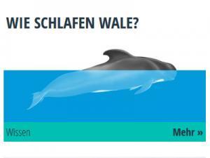 Ein Wal zur Hälfte im Wasser und zur Hälfte an der Oberfläche