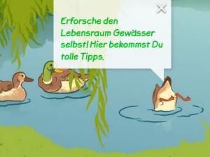 Ein Teich mit drei Enten, eine taucht