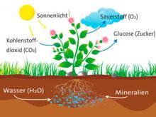 Erklärgrafik Photosynthese