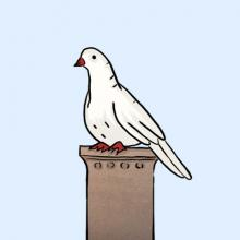 weiße Taube als Symbol für Pfingsten