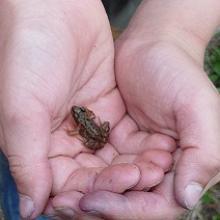Naturschutz: Minifrosch in Kinderhand