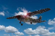 Zebraflieger aus Die Buschpiloten