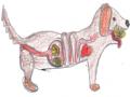 Ein Schäferhund hat Tennisbälle verschluckt